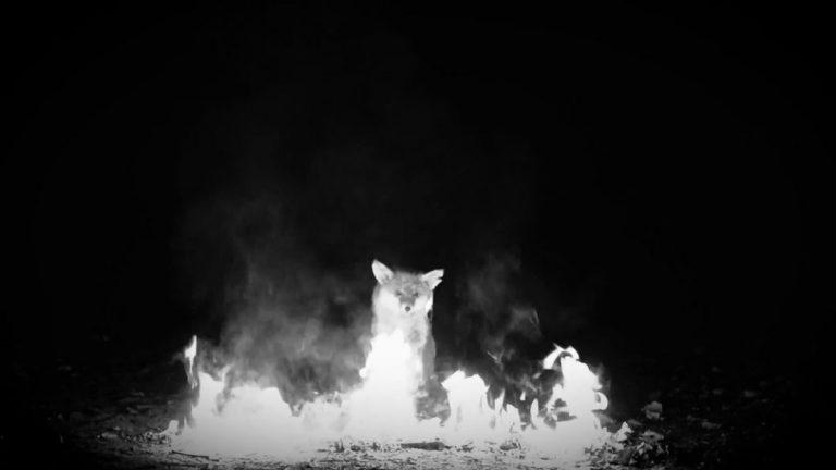 Zugezogen Maskulin & LGoony – Füchse 2015 (Absolute Beginner Remix)