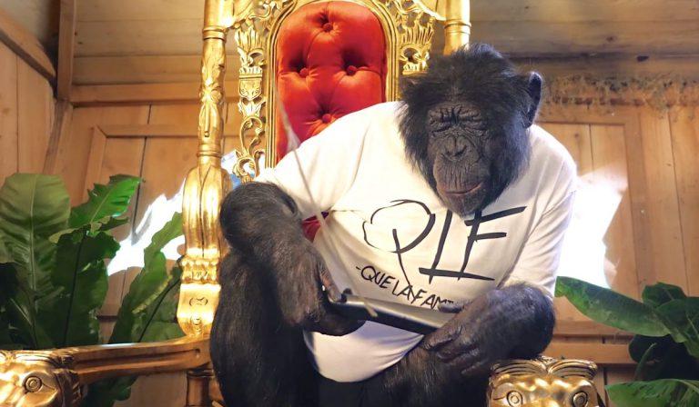 Gib dem Affen Zucker: PNL gehen Diamant // News
